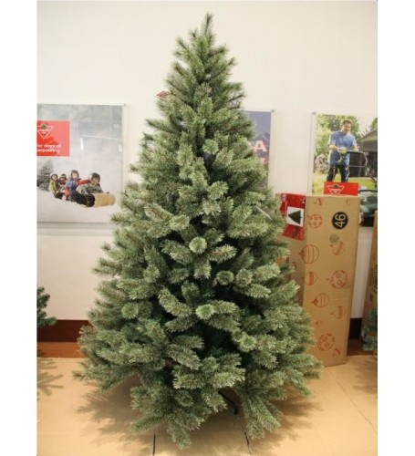 2.1 METER (7᾿) WASHINGTON SPRUCE TREE
